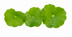 centella asiatica ingredient in is clinical cleansing complex
