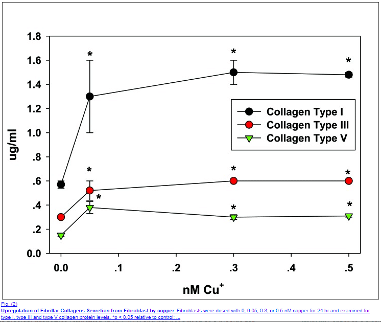 copper peptides stimulate collagen growth