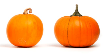 pumpkin enzymes for your face