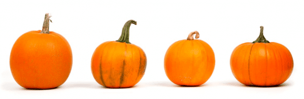 pumpkins contain ingredients which can improve your skin